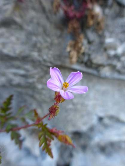 Flower growin out of roadside wall