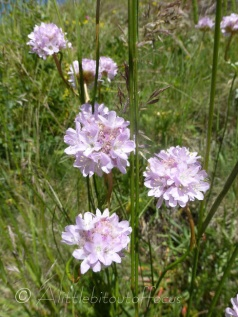 Alpine Thrift
