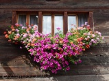 Chalet flowers