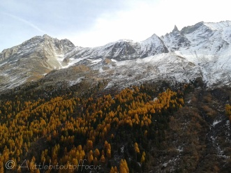 Autumn colours below the Aiguille de la Tsa