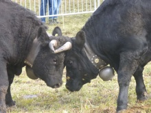 Vedette and Raton lock horns