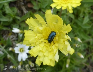 Yellow flower with bright green bug