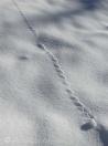Snowfall track