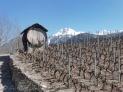 11 Vineyard barrel