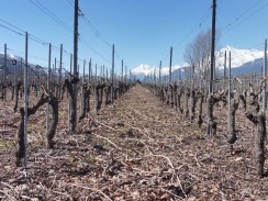 8 Vineyards