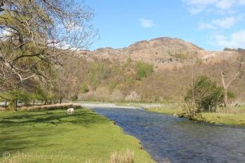 16 River Derwent