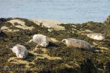 17 Seals