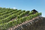 11 Vineyard