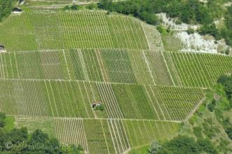 17 Vineyards