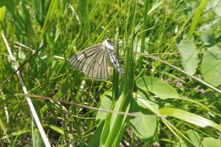 2 Butterfly