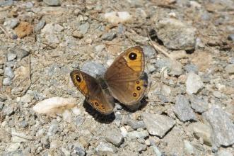 28 Butterfly