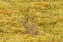 2a Rabbit