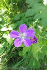 30 Flower
