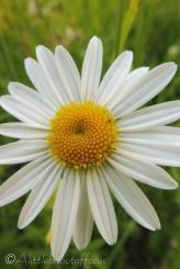 31 Flower