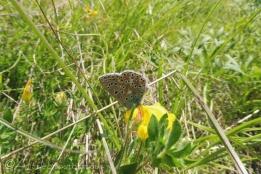6 Butterfly
