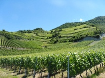 6 Rhone valley vineyards
