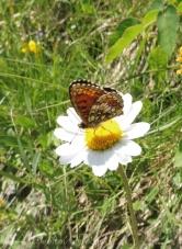 8 Butterfly