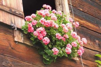 14 Window flowers