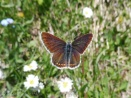 8 Beautiful brown butterfly