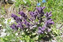 9 Interesting purple flower