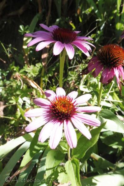 11 Garden flower