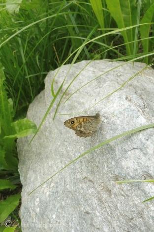 12 Butterfly