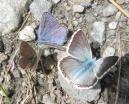 13 Kaleidoscope of butterflies