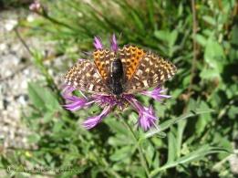 14 Butterfly