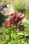 17 Unidentified flower