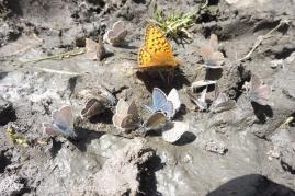 22 Butterflies