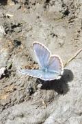 23 Blue butterfly