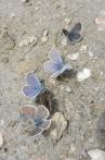 23 More butterflies