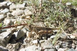 3 Grasshopper