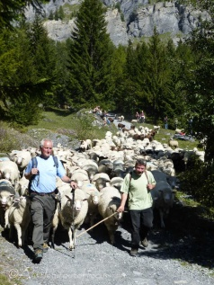 4 Shepherds with their flock