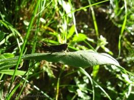 8 Grasshopper