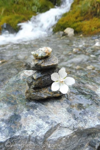 8 Mini-cairn with flower