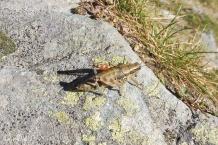 11 Grasshopper