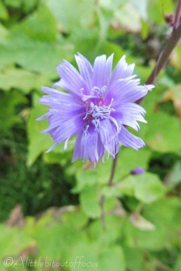 26 Purple flower