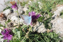3-blue-butterfly
