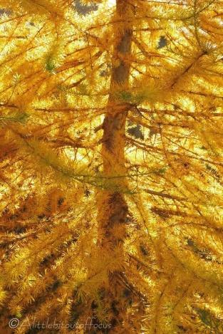 10-golden-colours