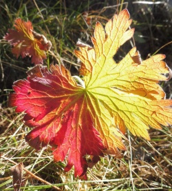 10-leaf