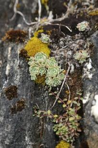 19-succulents