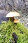 2-toadstool-or-mushroom