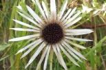 23-dead-flower