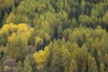 27-trees