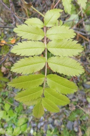 3-new-leaves
