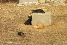9-kittens