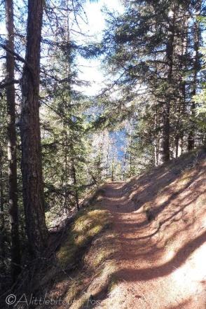 13-shady-path