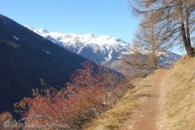 19-sunny-path