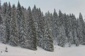 26-trees